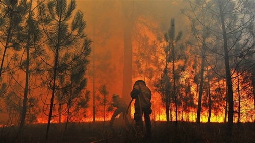 forest_fire_Portugal.jpg