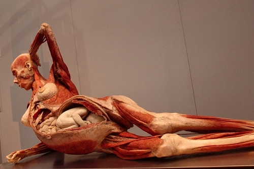 plastinated bodies-1.jpg
