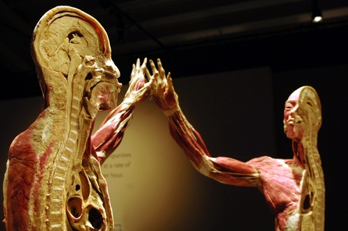 plastinated bodies-5.jpg